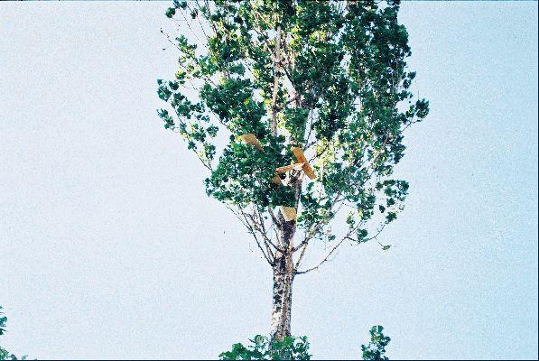 Trénér na strome